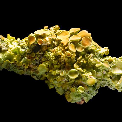 Moss & Lichen